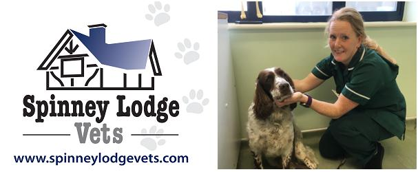Spinney Lodge Vets: Bitesize Guide To Protecting Pets' Teeth