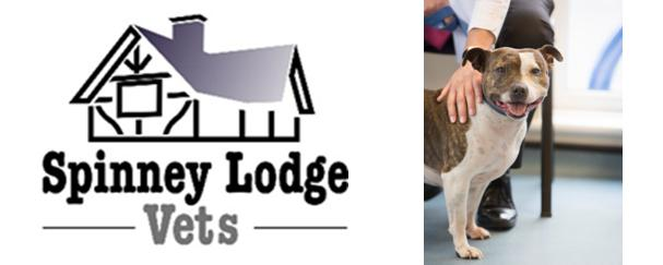 Spinney Lodge Vets – Vet's Bitesize Guide To Protecting Pets' Teeth